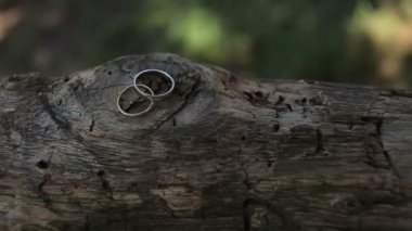 Wedding rings on a tree log — Stock Video
