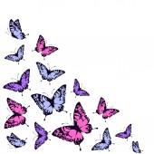 Butterflies design — Stock Vector