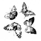 Butterflies design — Stock Photo
