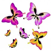 Disegno farfalle — Vettoriale Stock
