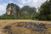 Rice field and mountians in Vang Vieng, Laos. — Stock Photo