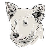 Head, muzzle the dog. Shepherd. Sketch drawing. Black contour on a white background. vector — Wektor stockowy