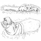 Hippopotames dans l'eau — Vecteur