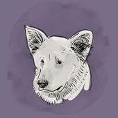 Head, muzzle the dog. Shepherd. — Stock Vector