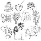 Set of doodle sketch Strelitzia, plumeria, lotus, elephant, palm, coconut, cactus, butterflies and seashells. vector — Stock Photo