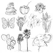 Set of doodle sketch Strelitzia, plumeria, lotus, elephant, palm, coconut, cactus, butterflies and seashells. vector — Foto de Stock