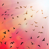 Birds, seagulls black silhouette on pink background, sunset, dawn. Vector — Stock Vector