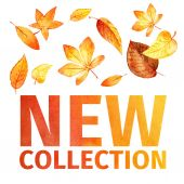 Watercolor leaves new collection. — Stock Photo
