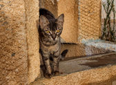 Playful cat, Tunisia — Stock Photo