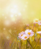 Vintage oil painting daisy-chamomile flowers field at sunrise — Stock Photo