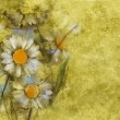White daisies on grunge paper background — Stock Photo #61704213