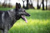Dog on the green grass — Stock Photo