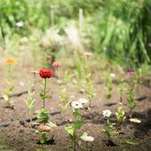 鲜花为您的设计的 — 图库照片