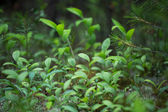 Green plants for your design — Stockfoto