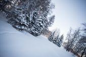 Krásné zimní les — Stock fotografie