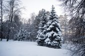 Beautiful winter forest — Stock Photo
