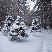 美しい冬の森 — ストック写真