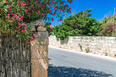 Street and oleandr around the fence in Malta — Stock Photo