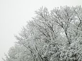 Icing on the tree during the winter and fog. — Stock Photo