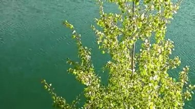 Tree in a breeze wavelets the lake in the background. — Stock Video