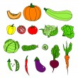 Set of ripe vegetables. Cartoon. pumpkin, zucchini, peppers, hot, chili, peas, tomato, cauliflower, cabbage, lettuce, cucumber, eggplant, beets, carrots — Stock Vector #52896875