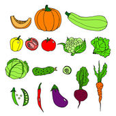 Set of ripe vegetables. Cartoon. pumpkin, zucchini, peppers, hot, chili, peas, tomato, cauliflower, cabbage, lettuce, cucumber, eggplant, beets, carrots — Stock Vector