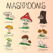 Collection of cartoon mushrooms. Hand drawing. Edible, poisonous. — Wektor stockowy
