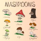 Collection of cartoon mushrooms. Hand drawing. Edible, poisonous. — Vector de stock