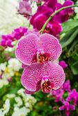 紫と白蘭 — ストック写真