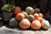Pile of colorful pumpkins on stone road background — Stock Photo