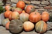 Pile of colorful pumpkins — Stock Photo