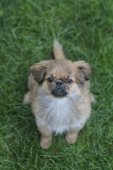 Little dog on the grass — Stock Photo