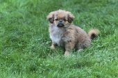 Dog on the grass — Stock Photo