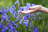 Elegant hand touching iris — Stockfoto