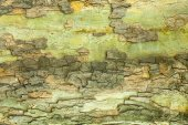 Tree bark texture — Foto Stock