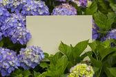 Paper note in hydrangea flowers — Stock Photo