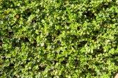 Yaprak duvar — Stok fotoğraf