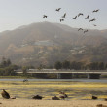 Flock of Sea Gulls migrating — Stock Photo #68192673