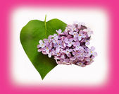 Leaves and petals lilac heart shaped (Valentine's Day, February  — Stock Photo