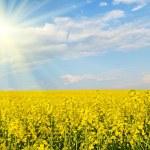 Big cloud on blue sky over yellow rape field (war in Ukraine, Uk — Stock Photo #60207773