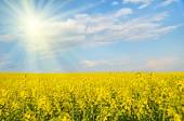 Big cloud on blue sky over yellow rape field (war in Ukraine, Uk — Stock Photo