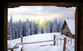 View from the hut on the snow-covered tree in mountains in sunli — Stock Photo
