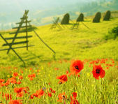 Fantastic landscape with flowers poppies on a background of fres — Foto de Stock