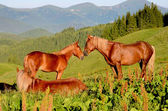 Two horses on pasture touching heads against the backdrop of the — Stock Photo