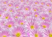 Violet floral background — Stock Photo