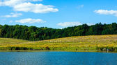 Idyllic summer landscape — Stock Photo