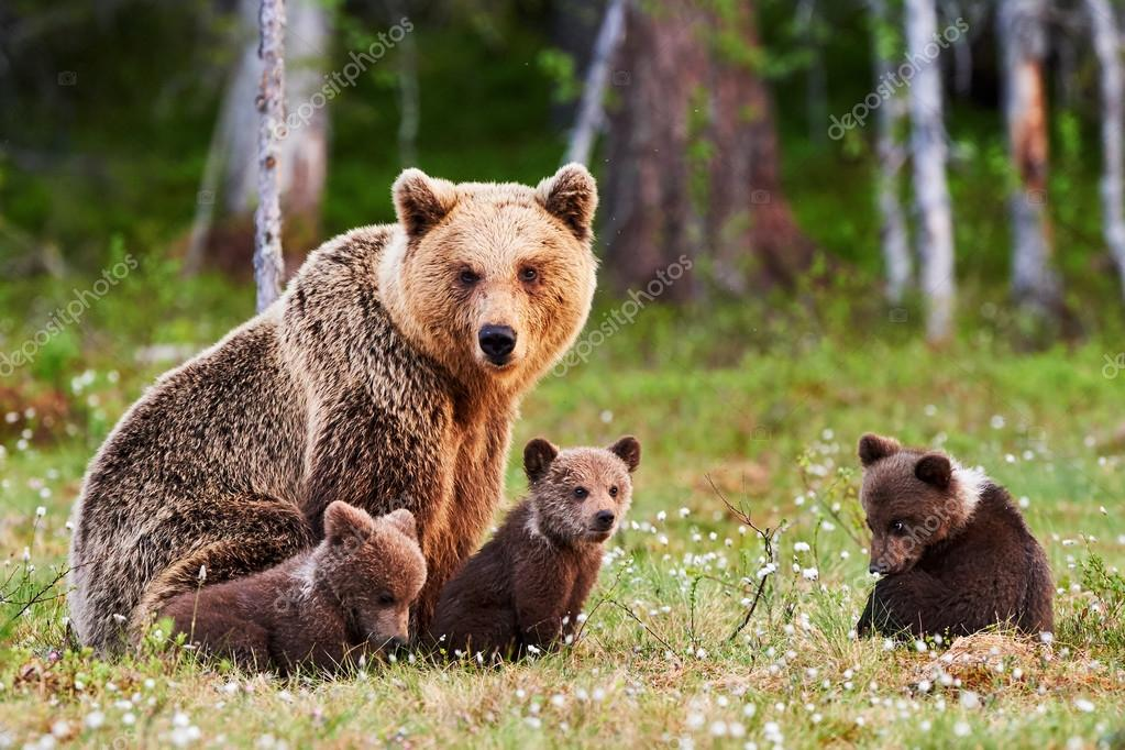 grizzly bear standing art