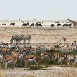 African animals close to a waterhole — Stock Photo #58745649