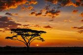 African sunset — Stock Photo