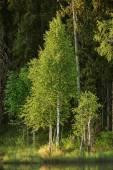 Árbol en primavera — Foto de Stock